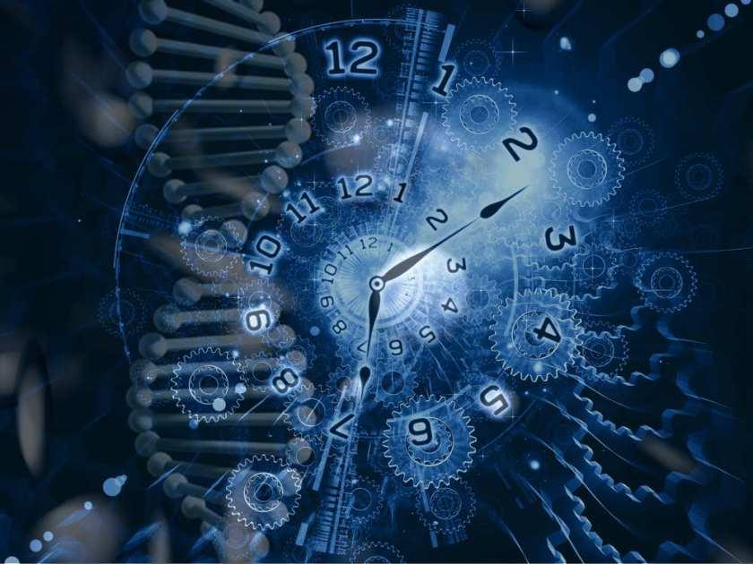 reloj_circadiano_adn_2